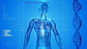 Lo scheletro e la sua funzione.