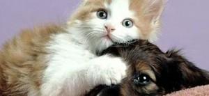Portrait of a kitten lying on top of a puppy.