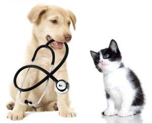 Dottor Bau & Dottor Miao - La Prima Mutua Italiana per Animali Domestici.