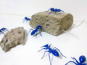 formiche blu commestibili