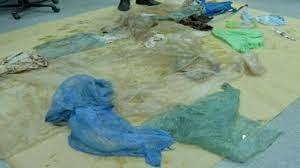 Balena arenata in Norvegia: aveva 30 sacchetti di plastica nello stomaco