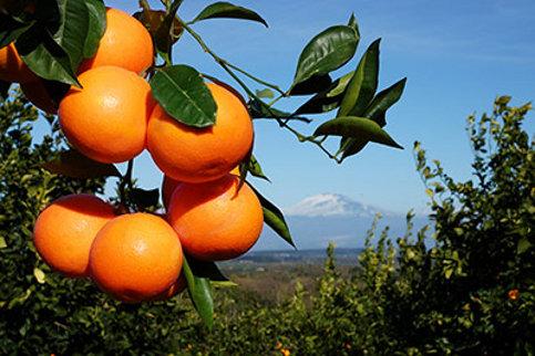 arance di sicilia online